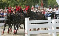 Karen Bassett Carriage Driving & Horse Driven Hearse